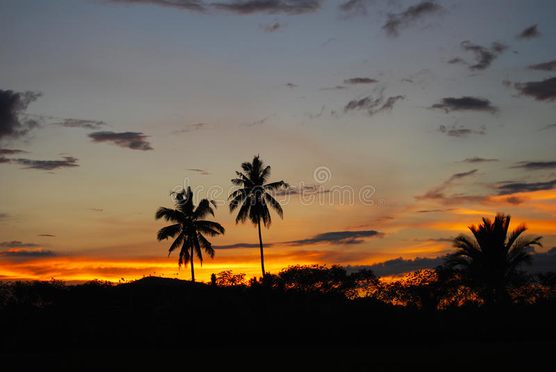 Palme di noce di cocco al tramonto Mindanao Filippine immagine stock libera da diritti