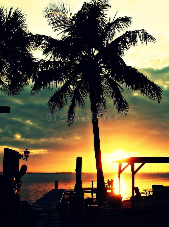 Palme di tramonto fotografie stock libere da diritti
