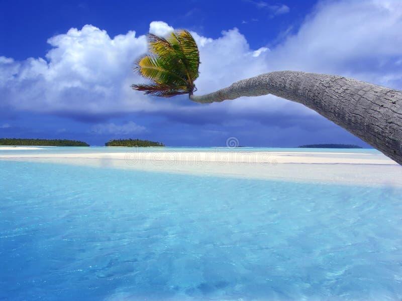 Palme, die über Lagune verbiegt stockfotos
