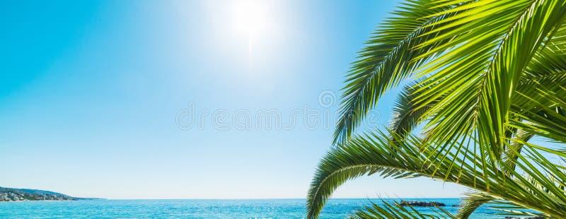 Palme durch das Ufer im Laguna Beach stockbild