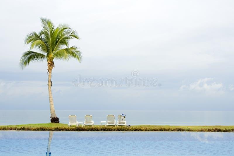 Palme durch einen Swimmingpool lizenzfreies stockfoto