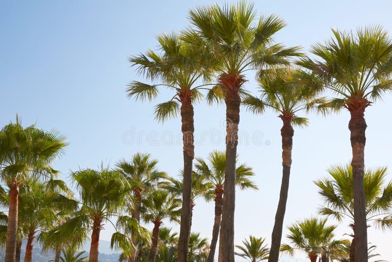 Palme e chiaro cielo in un giorno di estate soleggiato fotografia stock libera da diritti
