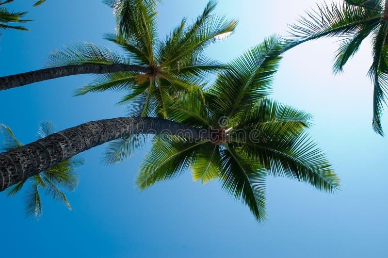 Palme e cieli fotografie stock libere da diritti