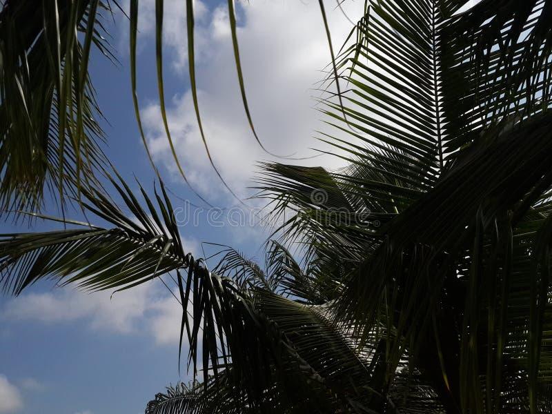 Palme e cieli immagine stock