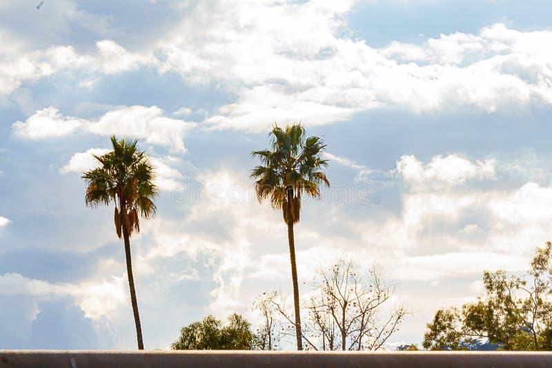 Palme e cime alte con il cumulo bianco luminoso, nuvole dell'albero di nimbus fotografia stock libera da diritti