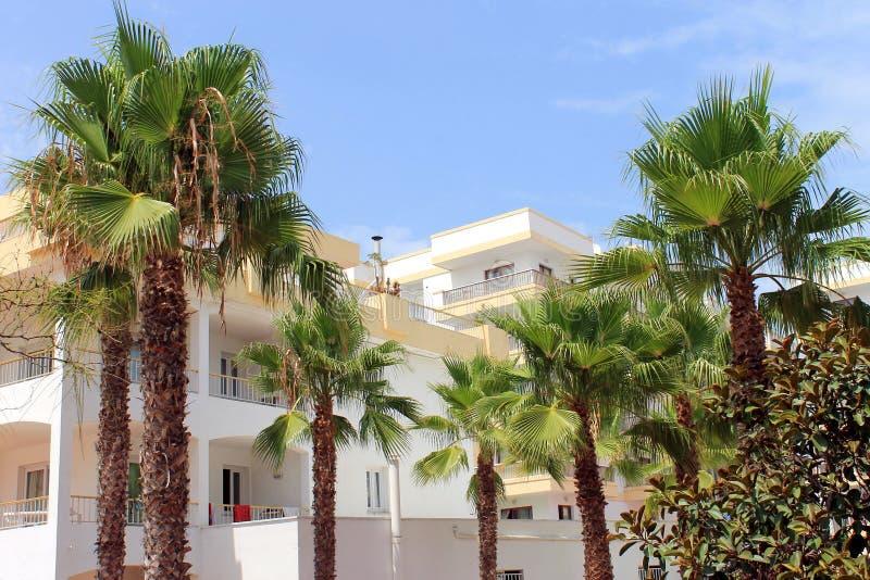 Palme e costruzione dell'hotel immagine stock