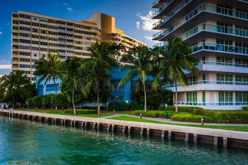 Palme e costruzioni su Belle Isle, in Miami Beach, Florida immagine stock libera da diritti