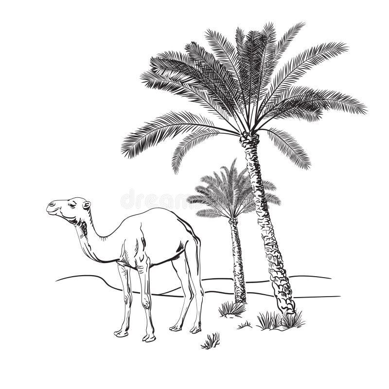 Palme e del cammello nel deserto Illustrazione disegnata a mano di vettore abbozzo illustrazione vettoriale