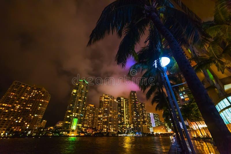 Palme e grattacieli nella passeggiata del fiume di Miami di notte fotografia stock libera da diritti