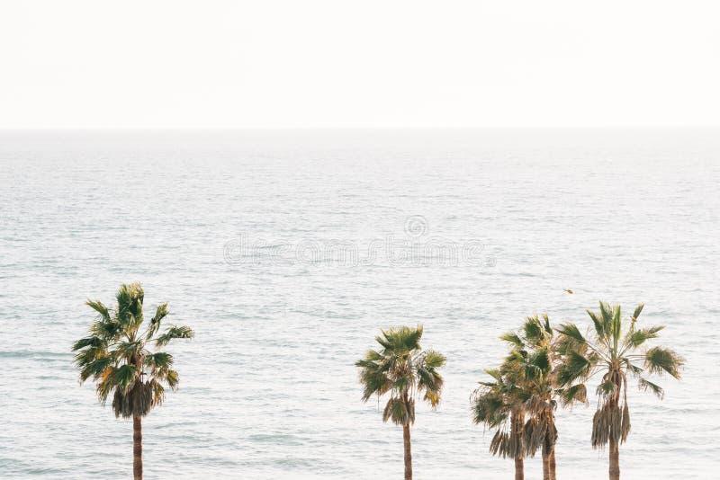 Palme e l'oceano Pacifico a San Clemente, contea di Orange, California fotografia stock libera da diritti