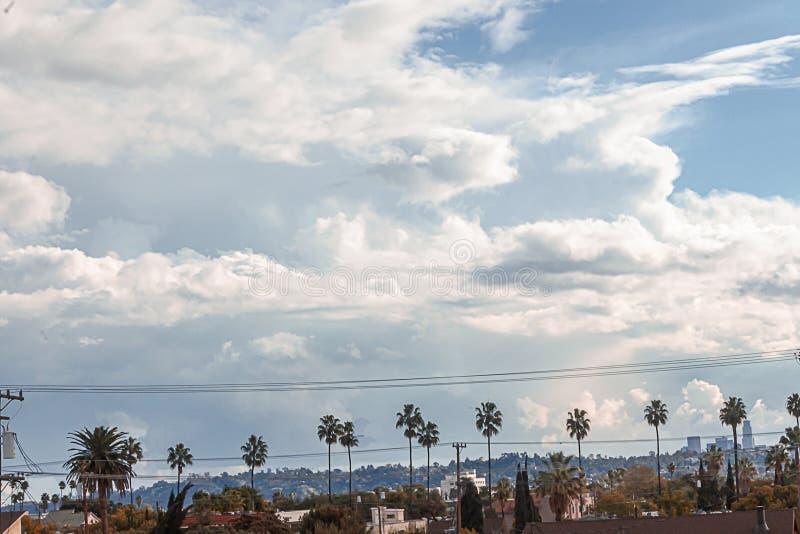Palme e scape della città contro le nuvole giganti con cielo blu fotografia stock