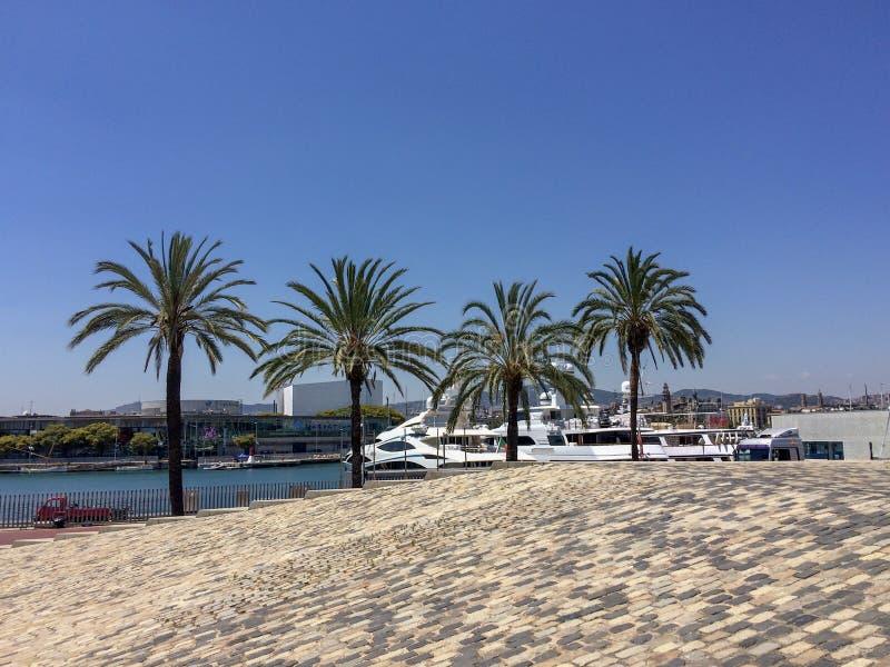 Palme e yacht fotografie stock libere da diritti
