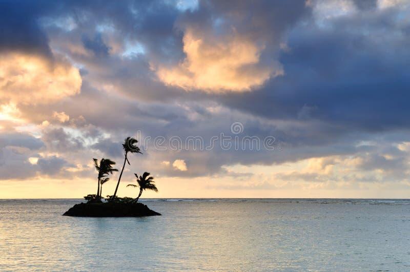 Palme in einer kleinen Insel in Hawaii lizenzfreies stockbild