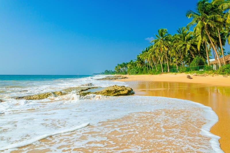 Palme esotiche stupefacenti del andhigh della spiaggia sabbiosa fotografia stock