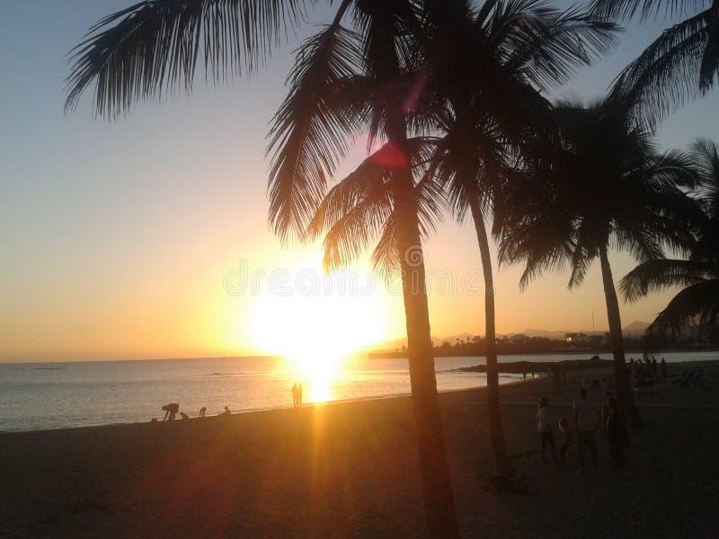 Palme a Fuerteventura in vacanza immagine stock