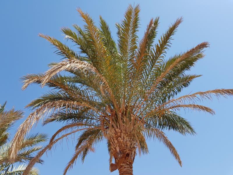 Palme gegen den Himmel lizenzfreie stockfotos