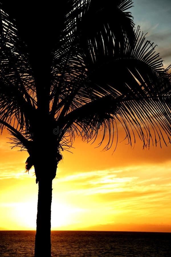 Palme gegen drastischen Himmel lizenzfreie stockfotografie