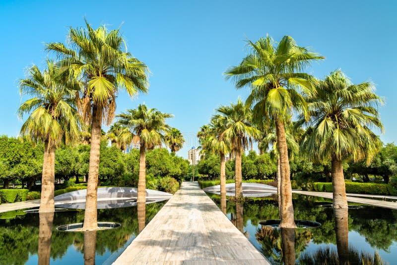 Palme Grove in Al Shaheed Park, Kuwait-Stadt stockbilder
