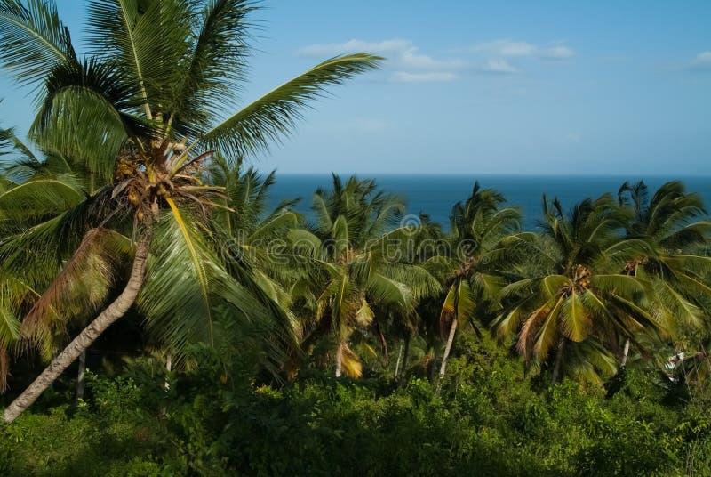 Palme Grove gegen den blauen Himmel und das Meer stockfoto