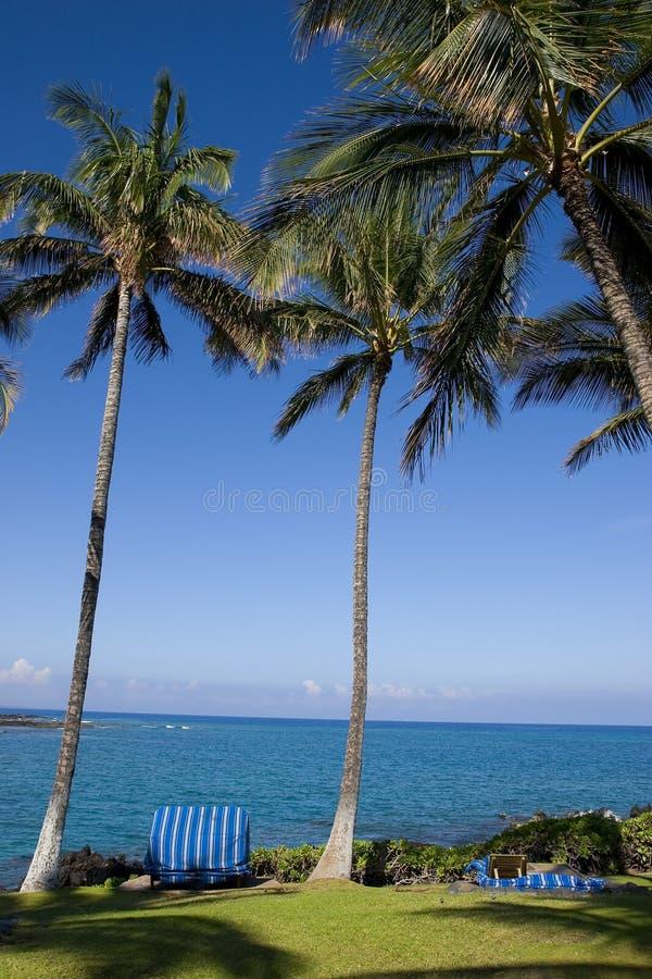 Palme hawaiane immagine stock