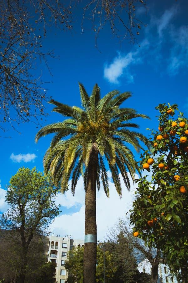 Palme im Allgemeinen Park Spanien Jerez de la Frontera lizenzfreie stockfotografie