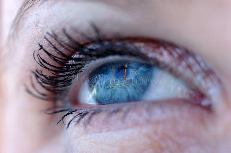 Palme im Auge stockbilder