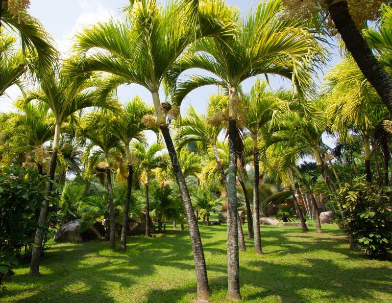 Palme im Garten lizenzfreie stockfotografie