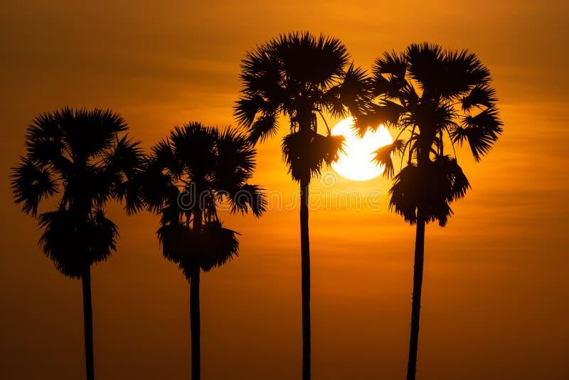 Palme im Morgensonnenaufgang stockfotos