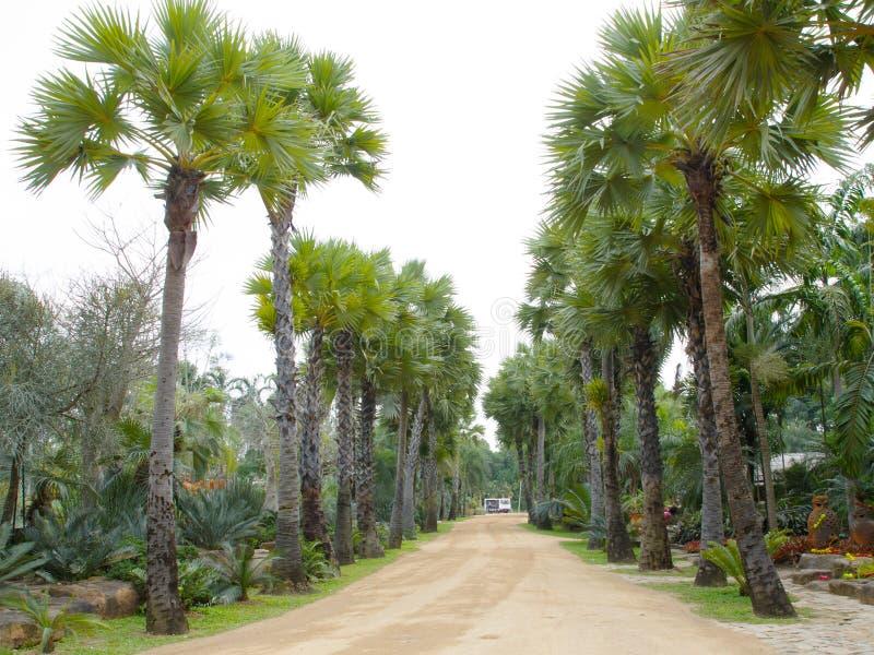 Palme im tropischen Garten lizenzfreies stockfoto