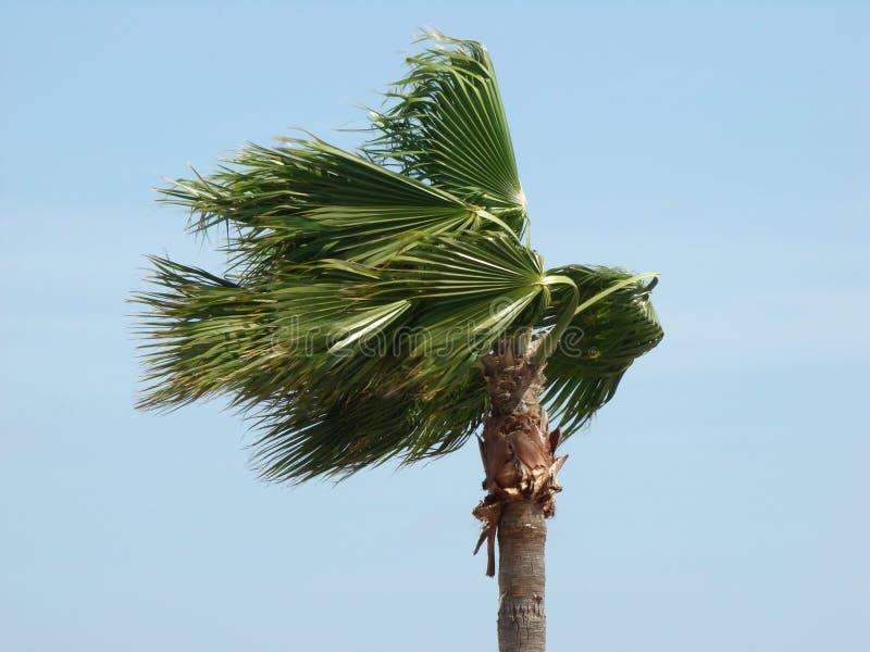 Palme im Wind lizenzfreie stockbilder