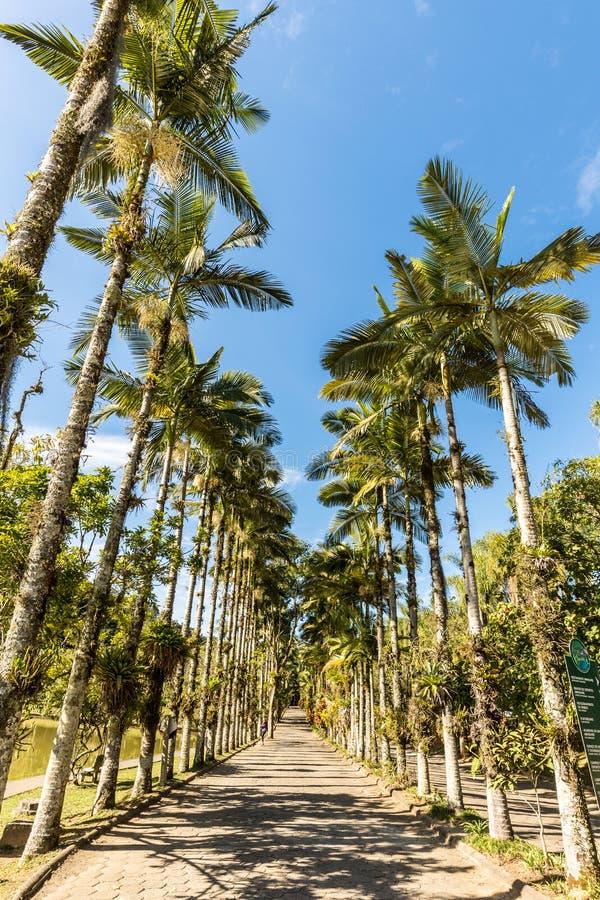 Palme imperiali al parco di Malwee Jaragua fa Sul, Santa Catarina immagini stock
