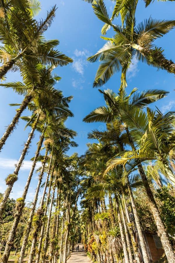 Palme imperiali al parco di Malwee Jaragua fa Sul, Santa Catarina fotografie stock