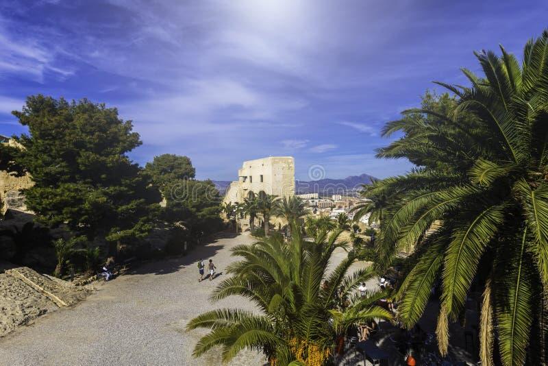 Palme lussuose e pareti della fortezza di Santa Barbara in Alicante Spagna - il punto di riferimento storico principale della cit fotografia stock libera da diritti