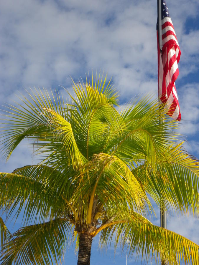 Palme mit einem Hintergrund des blauen Himmels und einer amerikanischen Flagge stockfotografie