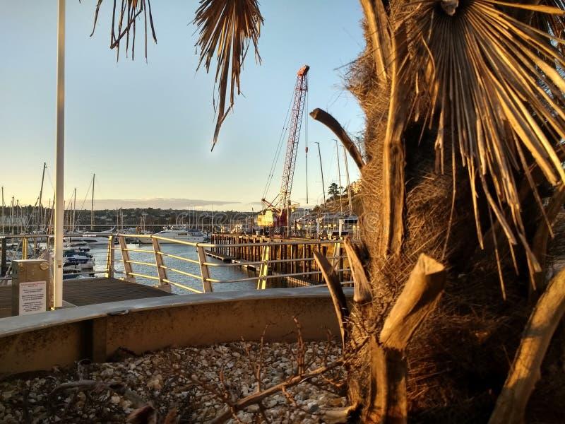 Palme mit Hafen und Kran lizenzfreies stockfoto