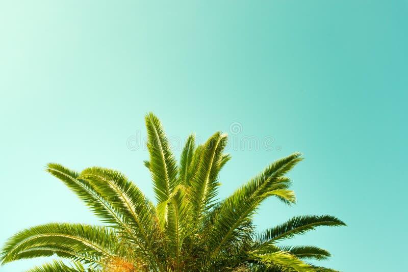 Palme mit Hintergrund des blauen Grüns lizenzfreies stockfoto