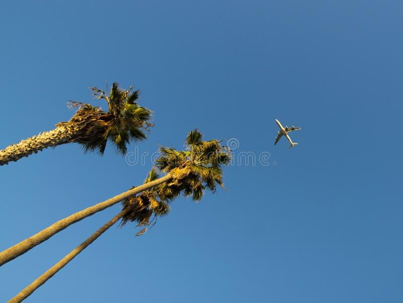 Palme mit Passagierflugzeug lizenzfreie stockbilder