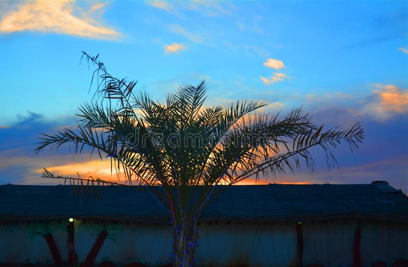 Palme mit Sonnenunterganghintergrund, Dubai UAE stockbilder