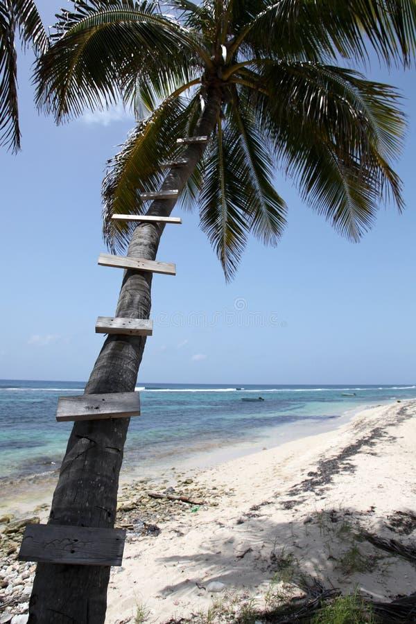 Palme mit Treppen lizenzfreie stockbilder