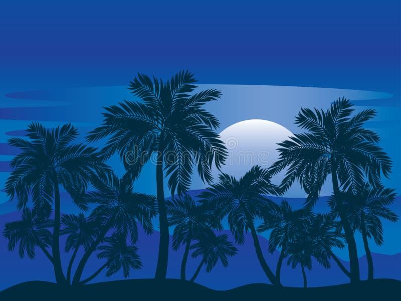 Palme nachts vektor abbildung