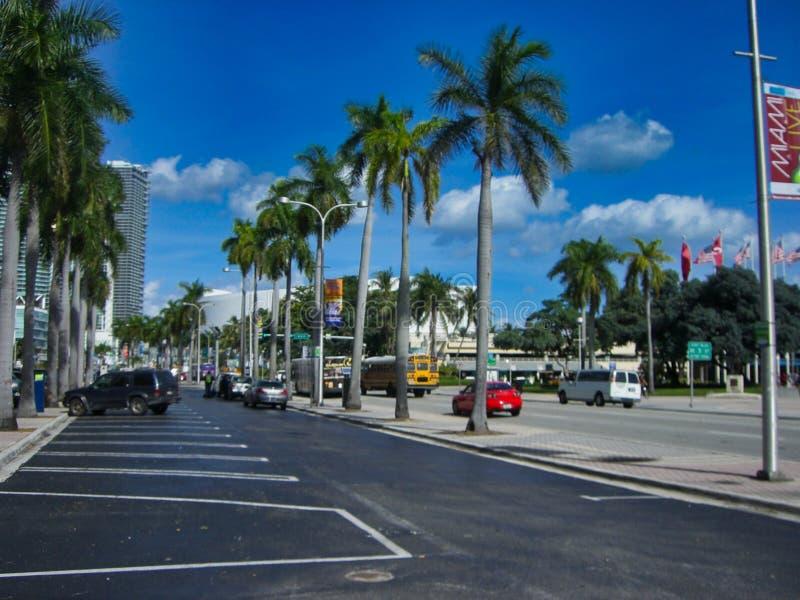 Palme neben den Straßen lizenzfreies stockbild