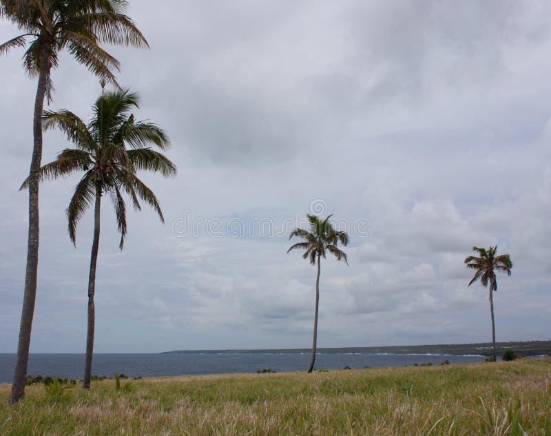 Palme nel Tonga fotografia stock libera da diritti