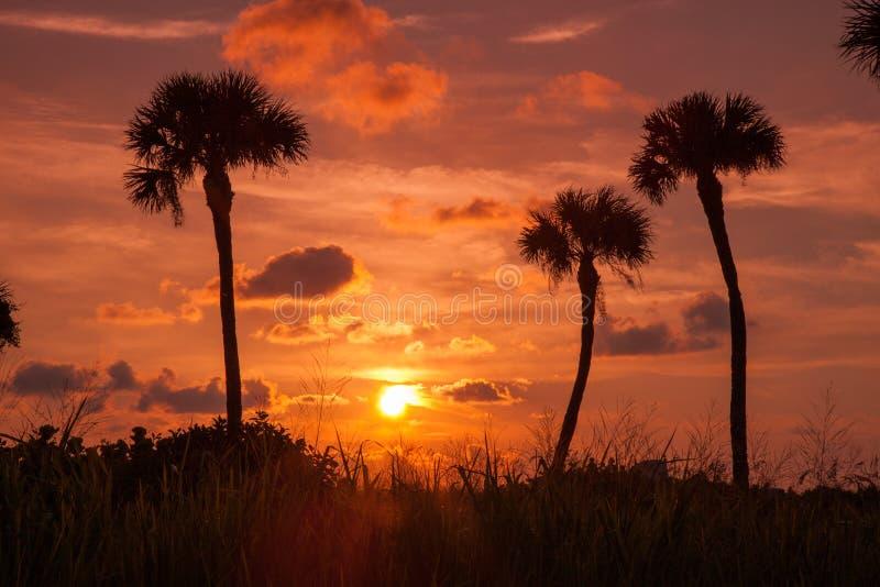 Palme nel tramonto fotografia stock libera da diritti