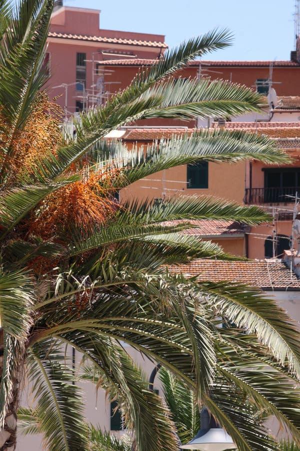 Palme nella città - Oporto Santo Stefano - Italia fotografia stock