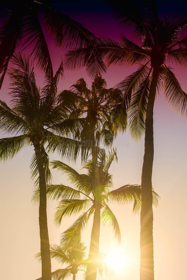 Palme proiettate su cielo blu Bello fondo tropicale, abbagliamento del sole, retro, filtro d'annata fotografie stock libere da diritti