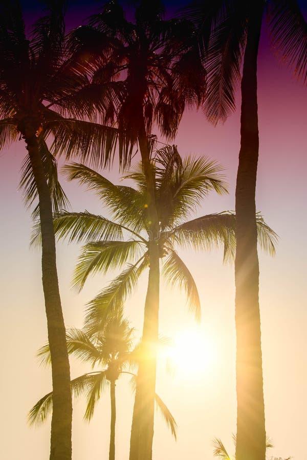 Palme proiettate su cielo blu Bello fondo tropicale, abbagliamento del sole, retro, filtro d'annata fotografia stock libera da diritti