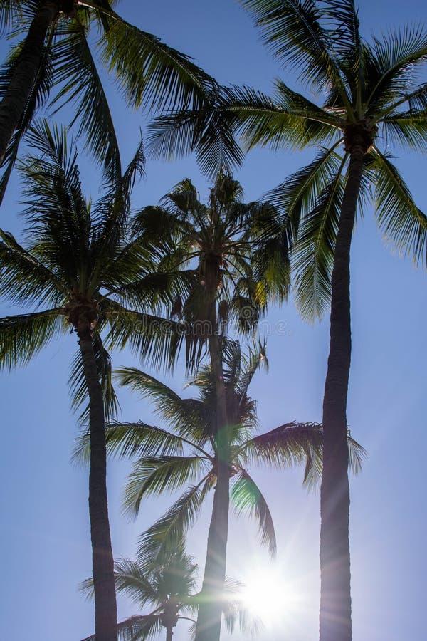 Palme proiettate su cielo blu Bello fondo tropicale, cielo blu, abbagliamento del sole Vacanze estive, natura, viaggio fotografia stock