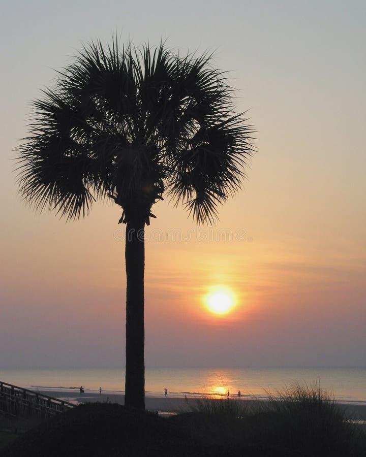Palme am Sonnenaufgang lizenzfreie stockfotos