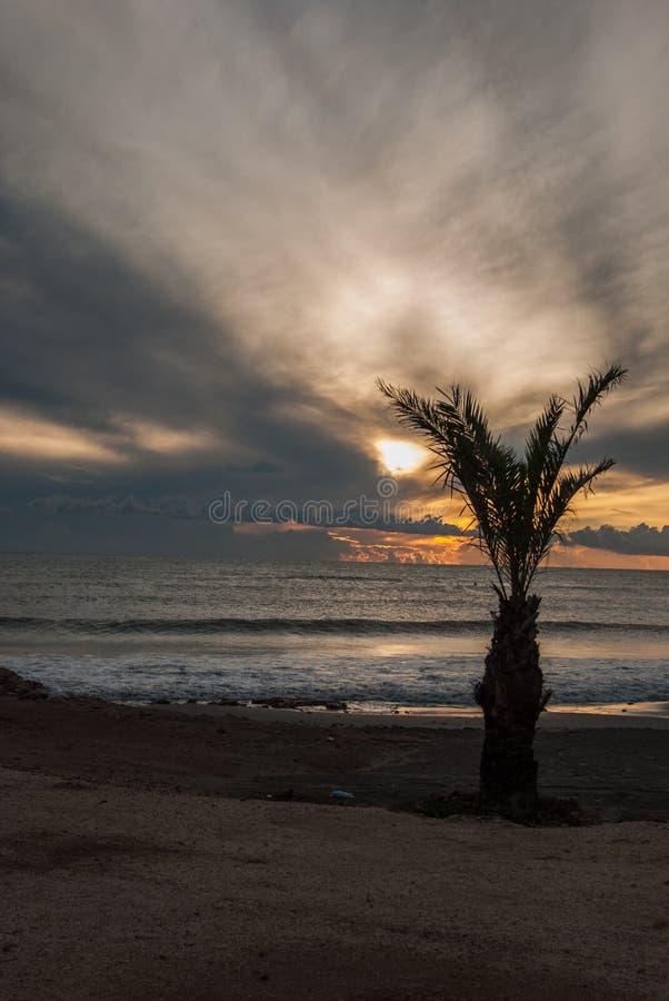 Palme am Sonnenuntergang lizenzfreie stockfotografie