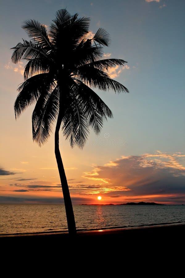 Palme am Sonnenuntergang lizenzfreie stockfotos